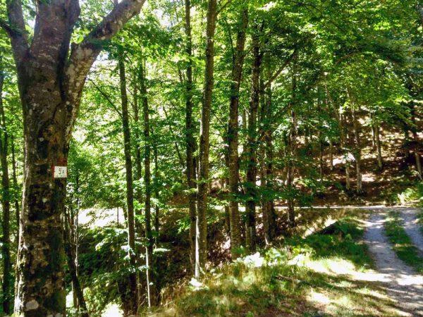 sentiero nel bosco cai 9a all'interno della riserva di acquerino