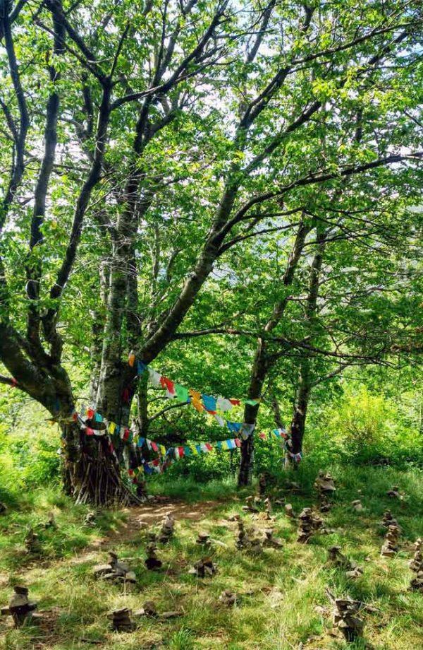 albero con occhi di terzani nel bosco