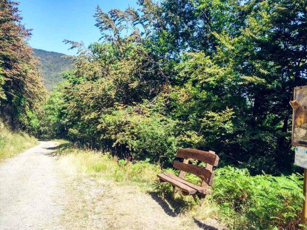 panchina lungo la strada sterrata all'interno del bosco