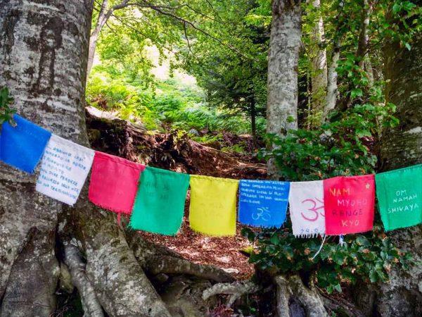 bandiere colorate di preghiera all'albero con occhi di terzani a orsigna