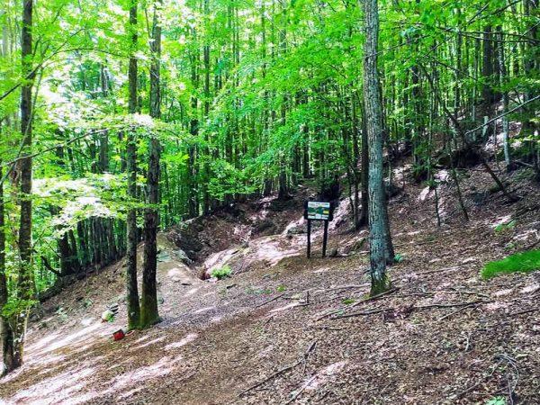 resti di bunker nel bosco con cartello esplicativo