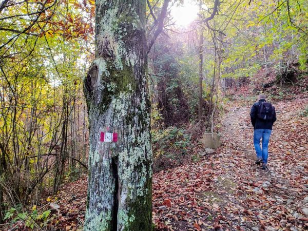 persona nel bosco sul sentiero della memoria verso monte scalari