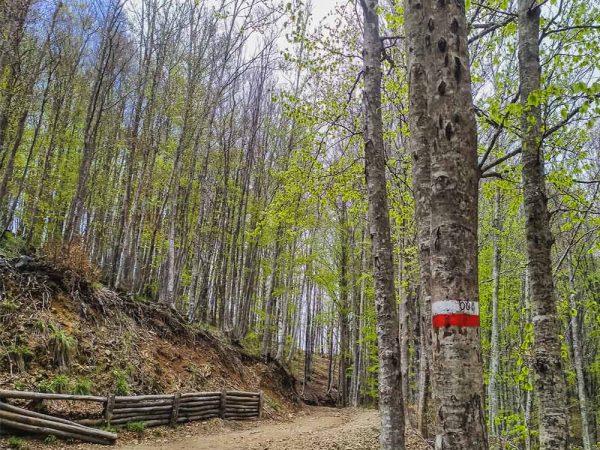 sentiero cai 00 nel bosco verso croce di pratomagno