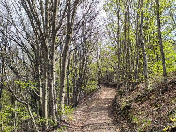 sentiero nel bosco verso croce di pratomagno