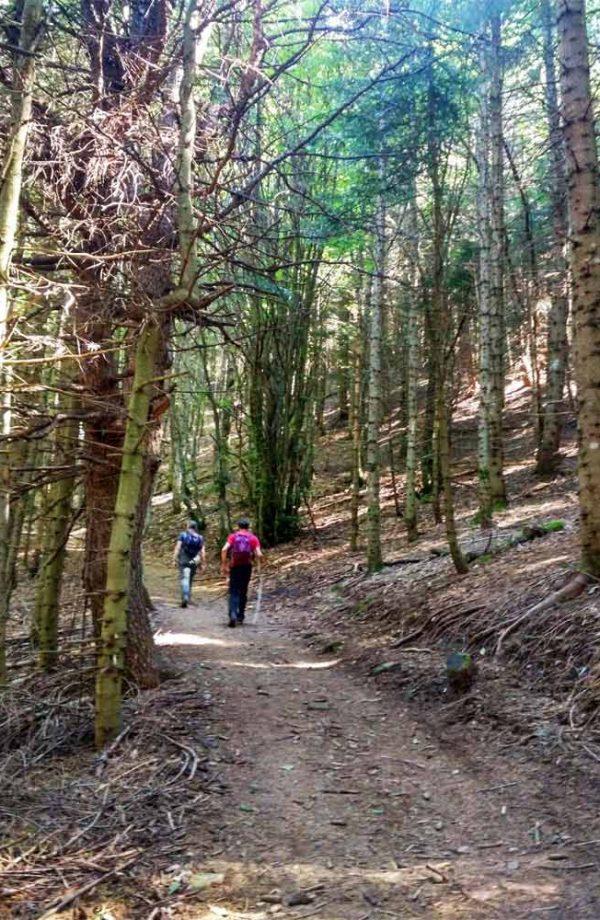 due persone in salita nel bosco verso libro aperto
