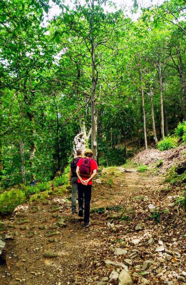 due persone che camminano verso l'albero con occhi di terzani