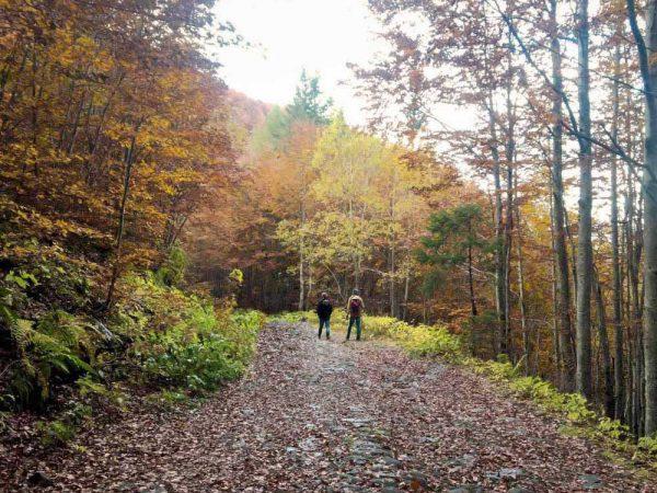 due persone su sentiero nel bosco in autunno