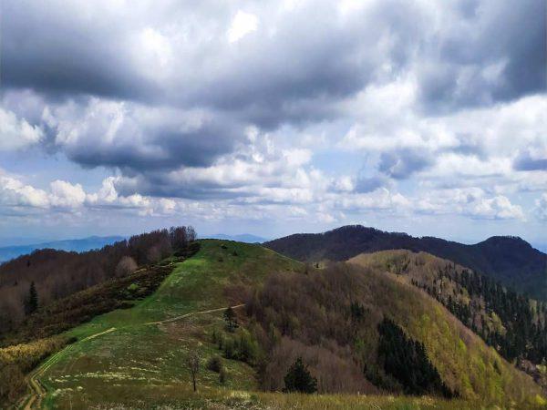 sentiero che costeggia una collina fiancheggiata dal bosco