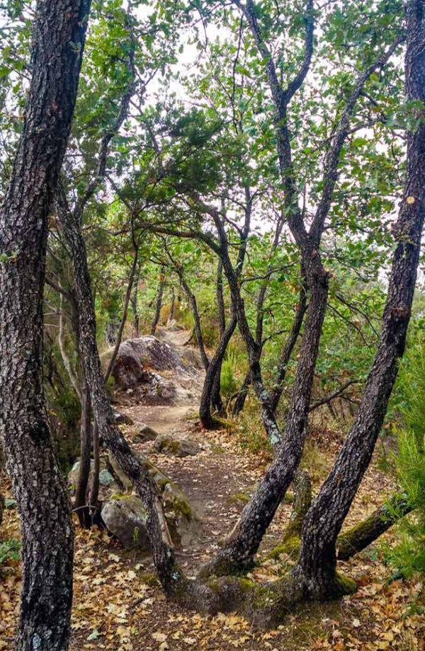 crinale del monte citerna che passa in mezzo agli alberi a poggio alla croce