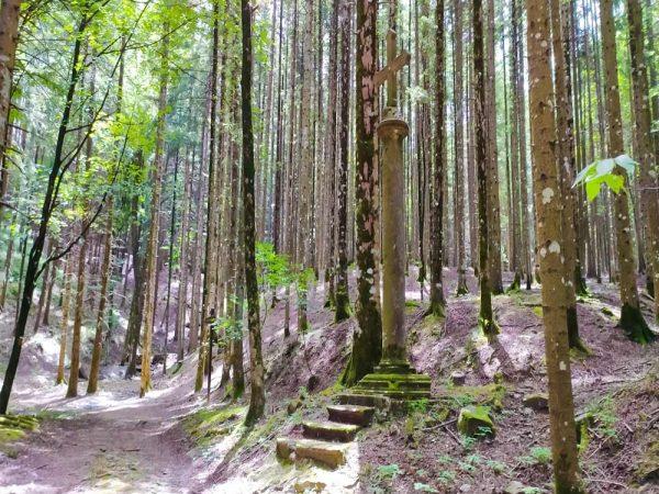 croce della peste in mezzo al bosco a vallombrosa