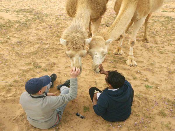 due persone che danno da mangiare a due cammelli nel deserto di wadi rum