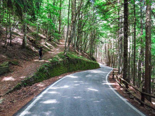strada asfaltata nel bosco a Vallombrosa con deviazione a sinistra verso la cappella del faggio santo