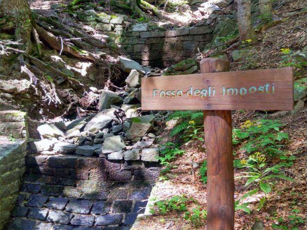 sorgente fosso degli imposti nel bosco ad abetone