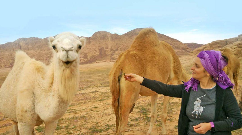 deserto indiana gio che da da mangiare ad un camello