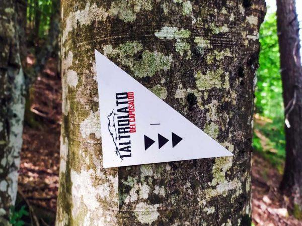 segnavia della linea gotica sull'albero