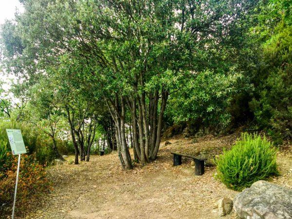 panchina tra gli alberi con cartello esplicativo sul sentiero naturalistico di poggio alla croce