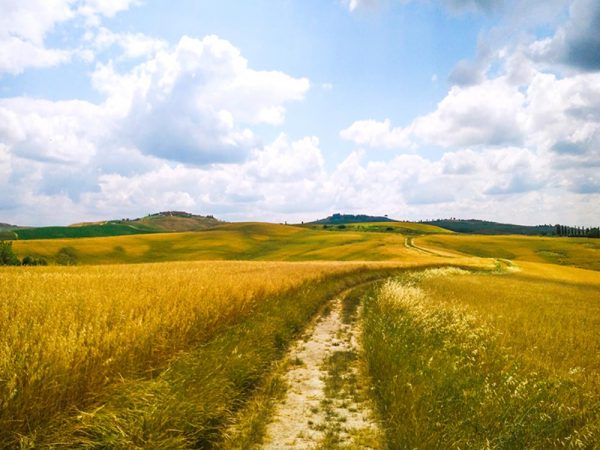 sentiero in mezzo ai campi di grano nelle biancane di leonina
