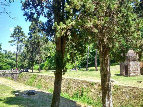 vista del prato con alberi del parco nottolini