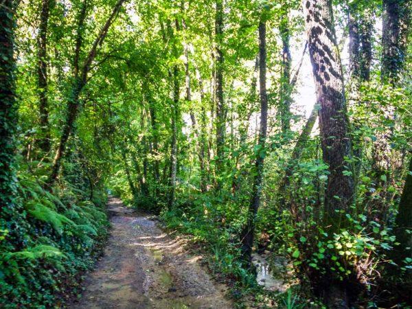 percorso-delle-fossate-bosco