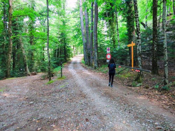 persona che cammina su suntiero nel bosco verso il metato di vallombrosa