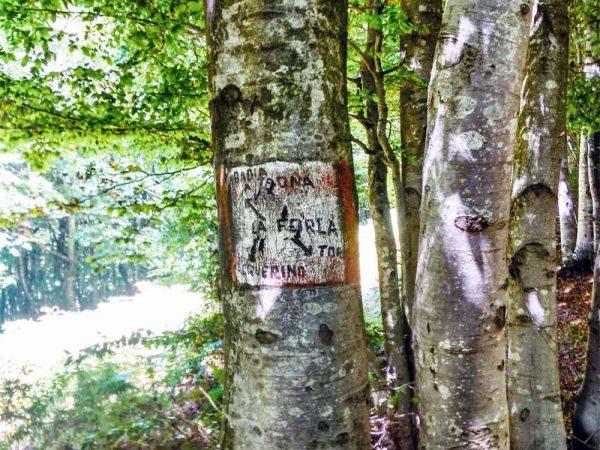 indicazioni sentieri segnalati sull'albero all'interno del bosco