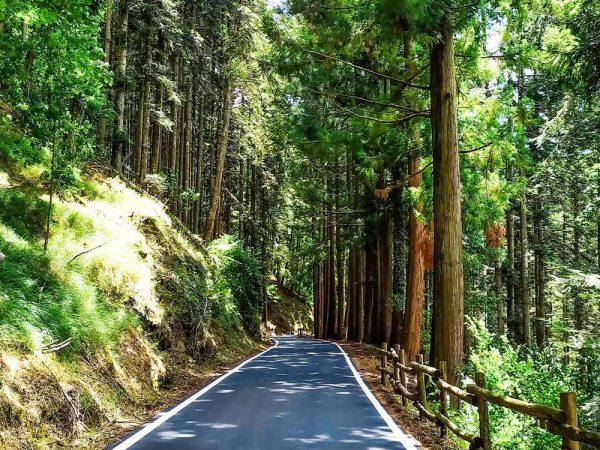 vallombrosa strada asfaltata in mezzo al bosco