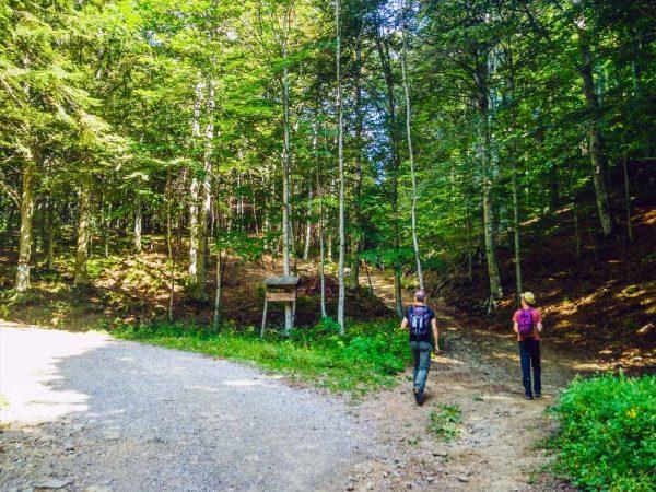 scorciatoia-nel-bosco