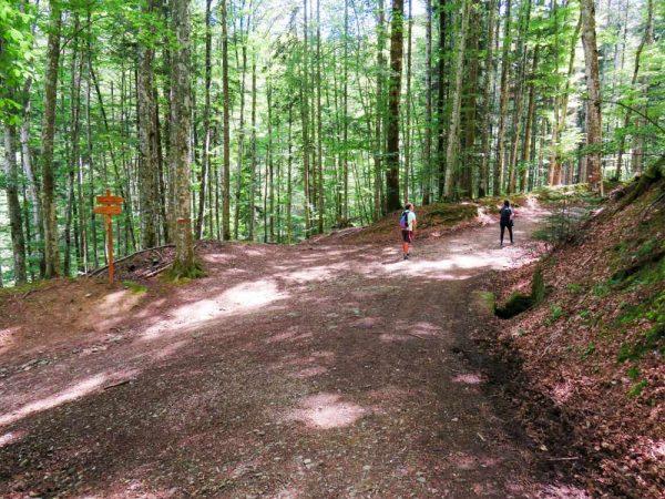 persone su sentiero nel bosco a vallombrosa