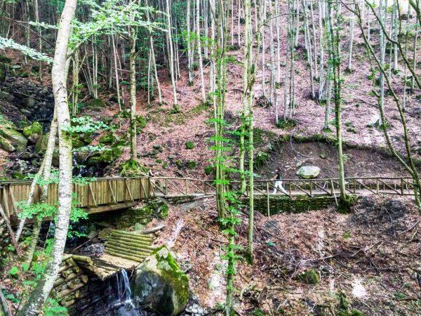 sentiero nel bosco verso la cascata doccione