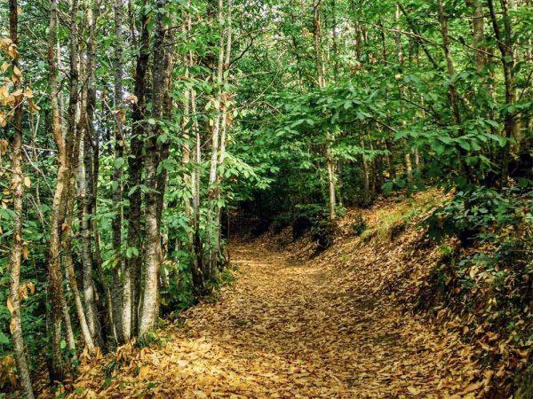 sentiero naturalistico nel bosco