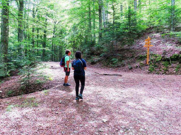 due persone al bivio nel bosco