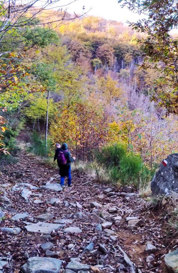 due persone che scendono sul sentiero nel bosco