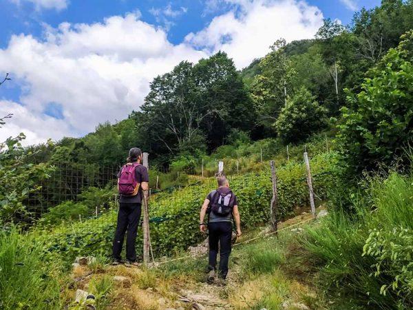 due persone che salgono su un sentiero in montagna con accanto un vigneto