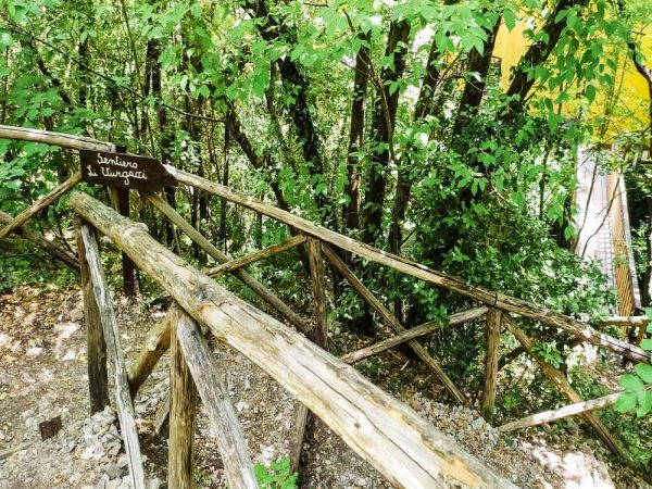 sentiero li vurgacci nel bosco
