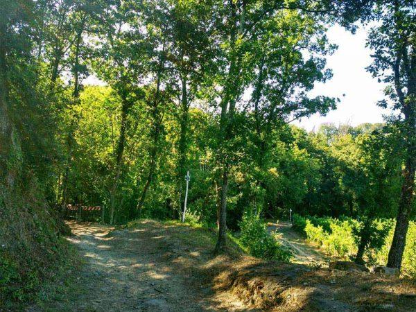 sentiero nel bosco sopra il mulinaccio