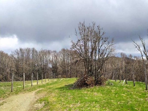 pratomagno sentiero montagna tra le praterie