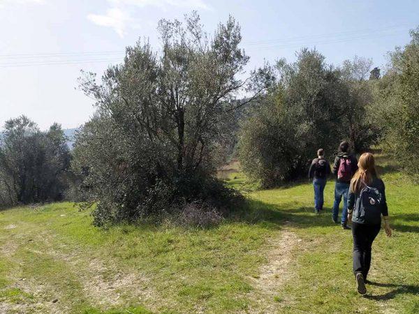 tre persone che camminano tra ulivi