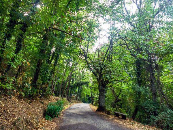 strada asfaltata fianchegiata dagli alberi verso poggio alla croce
