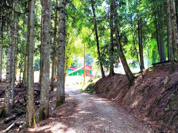 sentiero nel bosco che va verso il metato