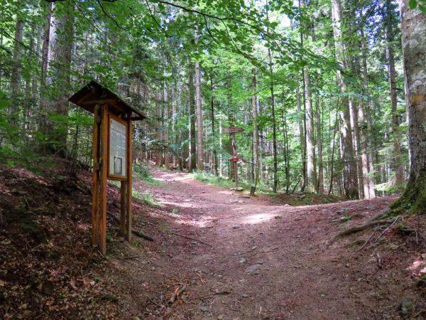 sentiero nel bosco a vallombrosa con deviazione a destra verso cappella di santa caterina