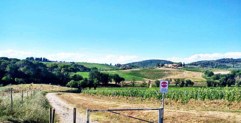 paesaggio con vigneti e colline verso il mulinaccio di scandicci