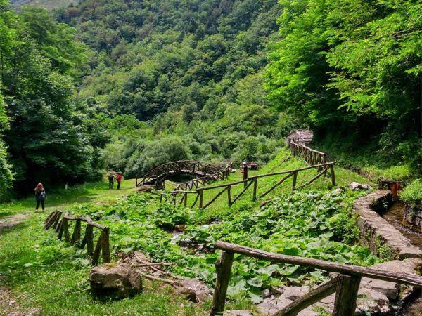 ponte nel verde fiancheggiato dal bosco